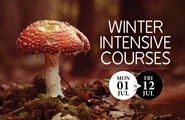 Winter Holiday Courses